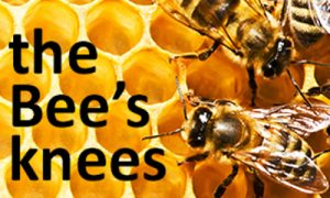 Bees knees image
