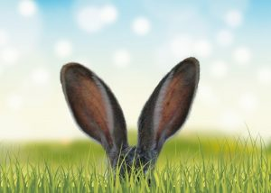 Image of easter bunny